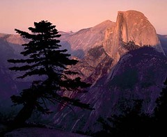 Half_Dome__Tree_-_thumb
