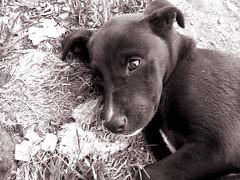 ... (Lawlieet) Tags: sepia perro nostalgia pena abandonado