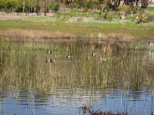 new wetland