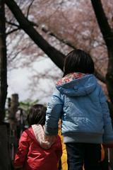今年も行こっか?桜の咲く公園に (by detch*)