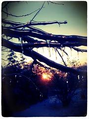 Ice (xxmidnightxrainexx) Tags: sunset appletree icesickles