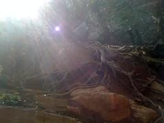 Raven Cliffs Roots