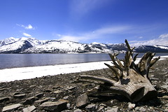 Jackson Lake, Grand Teton (debtripathi) Tags: utah midwest colorado roadtrip yellowstone wyoming brycecanyon archesnationalpark