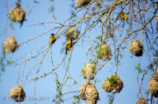 RYALE_Rwanda_Uganda_Safari-197