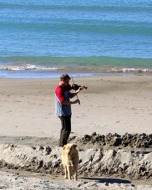 Fiddler on the Beach 1