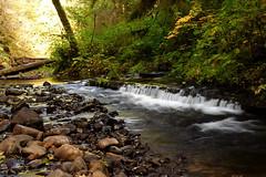 Gnat creek 2