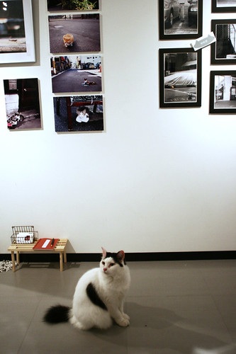 """exhibition """"町猫 - TOWN CATS"""""""