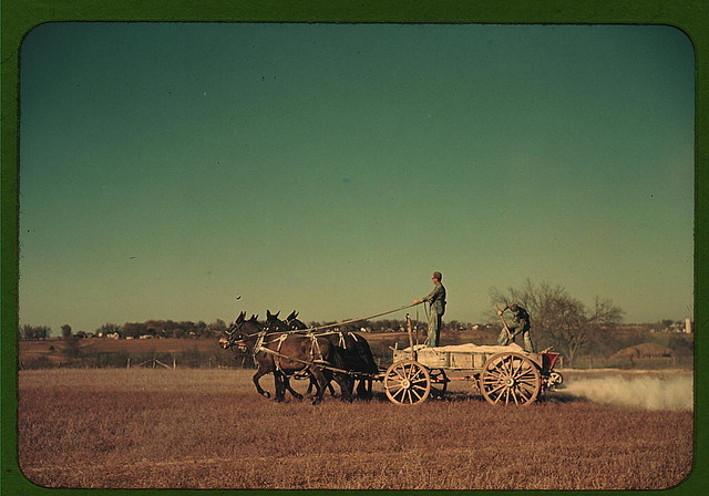 Georgia oat field? Southern U.S. (LOC)