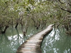 Mangroves near Waitangi (Gordon & Julia Gardner) Tags: sea newzealand holiday path away northisland mangroves waitangi naturesfinest aplusphoto juliaphoto