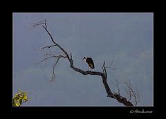 StorkScape