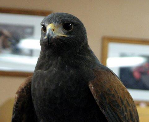 Harris Hawk World Bird Sanctuary visitors' center