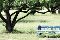 (corbata1982) Tags: tree grass bench banco capim lonely soledad poa rvore marinha corbata1982 solitud