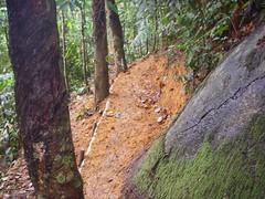 13 New trail (Phillage) Tags: kiara traks bukitkiara