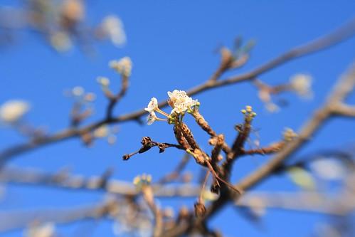 Lens Baby Blossom
