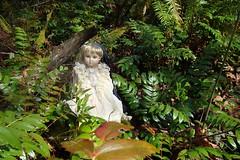 DSC01190dollever (portugita_norton) Tags: trees fern washington doll olympia evergreencollege livingdoll