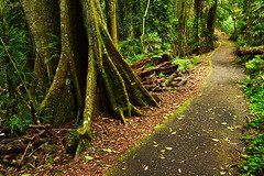 IMG_6086_Rainforest