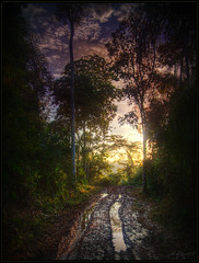 Into the jungle (Kaj Bjurman) Tags: road trees peru sunrise eos mud palm jungle hdr kaj cs3 photomatix 40d bjurman
