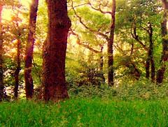 Fritjsplottum (Peace Spot) Midsummer's Eve, England.