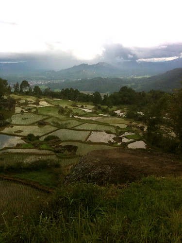 Rice fields above Rantepao, Toraja Utara