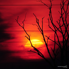"""Sun""Bird (Sir Mart Outdoorgraphy) Tags: panorama sun silhouette scenery outdoor bigma silhouete deadtree suria kedah nokin matahari silhuette nikonian d90 mentari naturalfilter matahariterbenam nikonuser penangflickr sgdua siluwet sigma150500 sirmart outdoorgraphy kedahflickr mataharinaik mentarimerahdiufuktimur sangsuria"