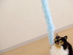 DSCF2709 (junku) Tags: cats cute cat kitten finepix kitties nana fujifilm fujifilmfinepixz2