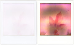red leaf in a snowstorm (hessiebell) Tags: film polaroid sx70 weird diptych before instant modified after oops expired landcamera 600film poladiptych