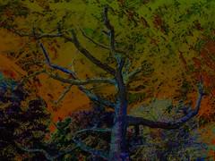Dark Tree (Tim Noonan) Tags: tree art digital forest photoshop dark creative vivid manipulation tup 5for2 onlythebestare visuallyenhanced clevercreativecaptures imagery stealingshadows maxfudge awardtree amongstthethorns maxfudgeexcellence maxfudgeawardandexcellencegroup