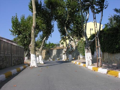 Fák az úton