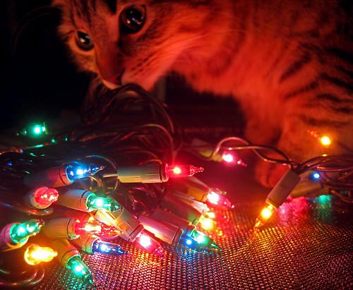 Christmas Curiosity