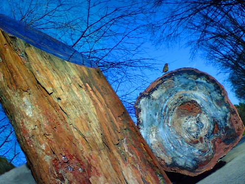 nat history pet wood by phrostart.