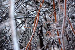 DSC_0059 (setao86) Tags: winter snow macro ice landscape frozen spring scenery frost icesickles