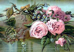 pk roses1