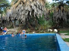 christmas in turkana... with goats (meaduva) Tags: africa christmas travel safari swimmingpool goats turkana northernkenya