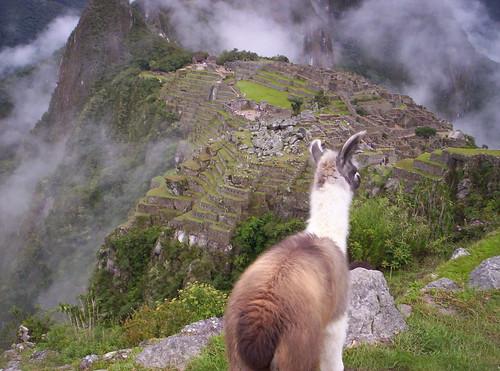 Ammirando il Fascino di Machu Picchu by Grabby Walls