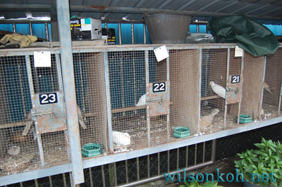 Breeding Boxes For Pigeons Flickr.com · Pigeon Breeding