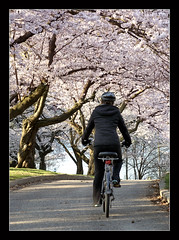 Biking In Bloom