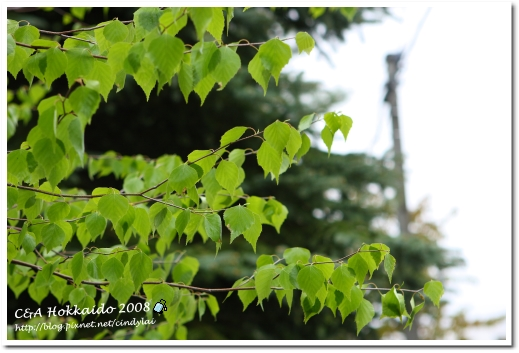 Hokkaido_0428