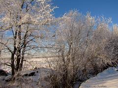 хрустальный лес (СветланаБалынь) Tags: зима поле иней мороз россия деревня snow tree landscape landscap деревья лес солнцеснег зимняясказка пейзаж природа небо облака sunsetsundown sky clouds nature dusk russiasnowwinter frost winter
