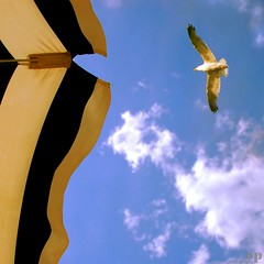The Solitary Sea Gull (Osvaldo_Zoom) Tags: sea summer sky italy bird beach umbrella seaside mare seagull gull explore solitary frontpage calabria