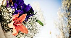 Orange Lily ! (Nas t) Tags: flowers orange white sorry rose lily im romance