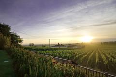 (Anne C. Berry) Tags: france bordeaux vineyards