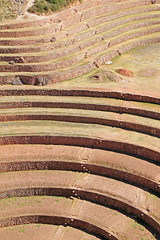 playing with circular lines (running away!) (daniel virella) Tags: lines inca wall cuzco architecture stairs america stones circles cusco curves steps perú andes walls agriculture sacredvalley moray incan vallesagrado enginnering tawantinsuyu