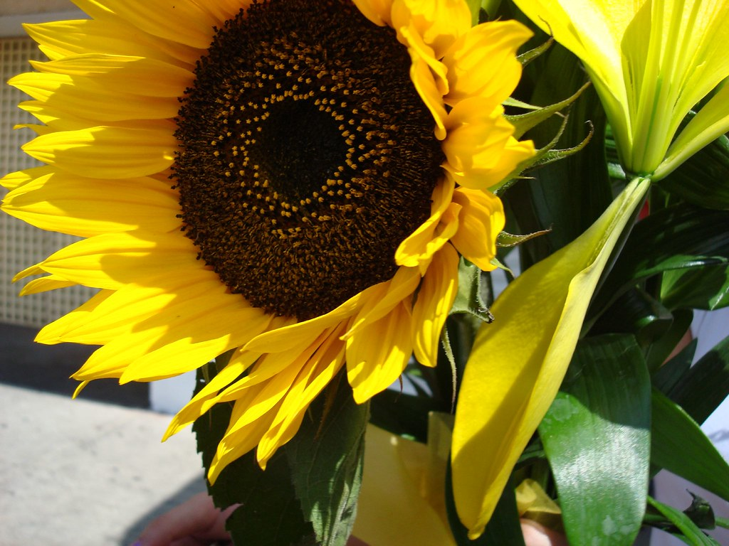 The worlds most recently posted photos of flores and lilis flickr girasol ae digit tags flowers flores girasol lilis izmirmasajfo
