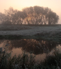 Frosty Reflections (torimages) Tags: winter mist cold tree water misty frost frosty sd allrightsreserved muted mutedcolour flickrsbest mywinners autumnautumnchangingtowinter donotusewithoutwrittenconsent copyrighttorimages