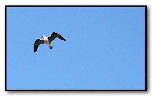 Fly away....