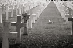Wandering around white crosses (.m for matthijs) Tags: life blackandwhite bw white france bird beach cemetery grass canon eos death us blackwhite war cross seagull gull perspective crosses graves american memory ww2 jewish soldiers omaha remembrance normandy dday gravestones starofdavid calvados secondworldwar alignment 30d omahabeach warcemetery collevillesurmer aligned canoneos30d canonef24105mmf4lisusm magendovid canonef24105mmf40lisusm