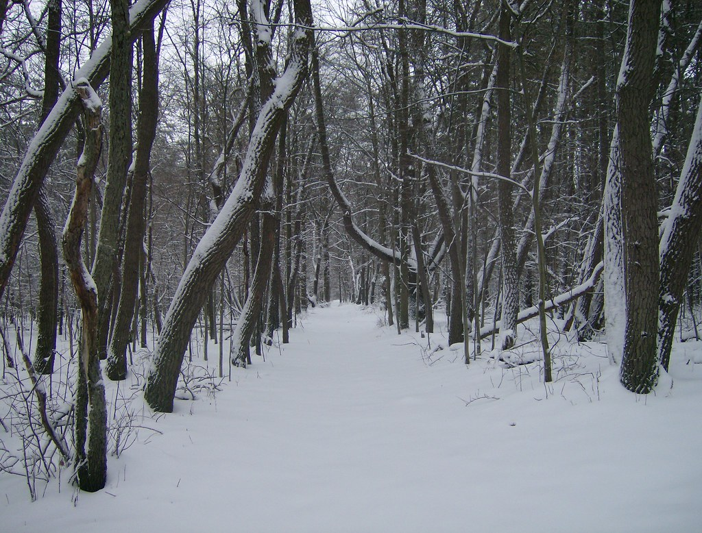 Snow cover trail in Oak Openings Metropark Swanton, Ohio