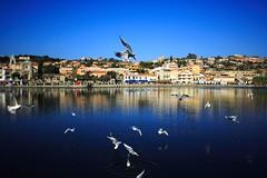 Spettacolo a Ganzirri (ToniZancle) Tags: blue sky italy seagulls lake lago landscapes italia cielo sicily paesaggi gabbiani sicilia messina ganzirri anawesomeshot tonizancle flickrsicilia