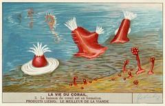 corail 5