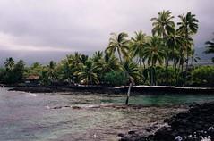 dreaming of palm trees (troutwerks) Tags: hawaii warm dreaming palmtrees bigisland mahimahi humidity seaturtles ahhhhhh balmy hukilau hapuna cityofrefuge kahunas konacoast maunakeabeachhotel maitais pupus wanttogoswimming sothseasbreezes sharkiesstayaway alooooooha